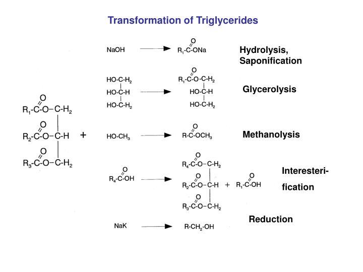 Transformation of Triglycerides