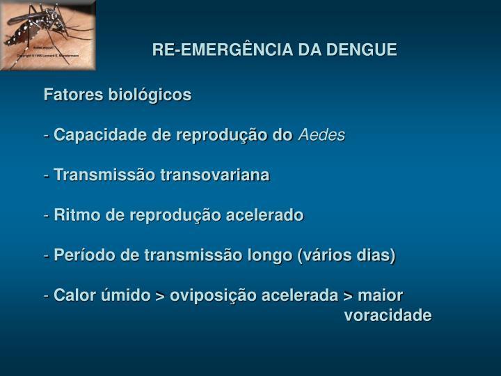 RE-EMERGÊNCIA DA DENGUE