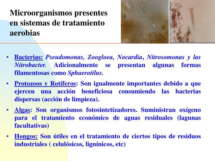 Microorganismos presentes en sistemas de tratamiento