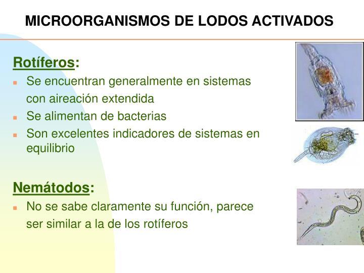 MICROORGANISMOS DE LODOS ACTIVADOS