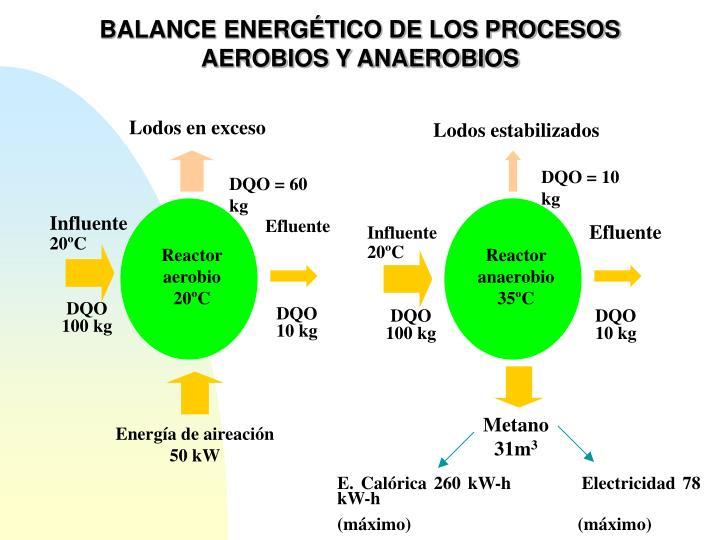 BALANCE ENERGÉTICO DE LOS PROCESOS AEROBIOS Y ANAEROBIOS