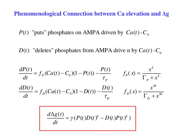 Phenomenological Connection between Ca elevation and