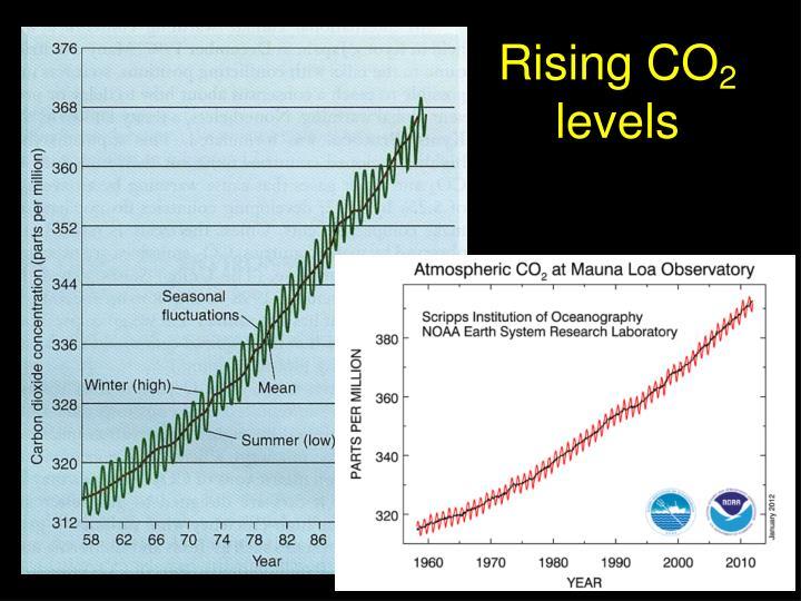Rising CO