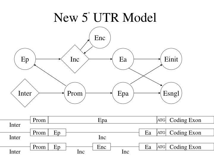 New 5 utr model