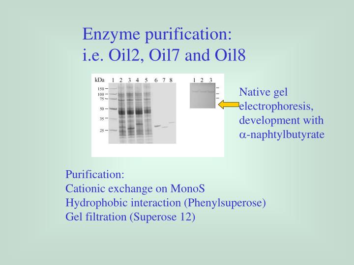 Enzyme purification: