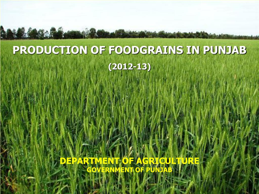 PPT - PRODUCTION OF FOODGRAINS IN PUNJAB PowerPoint Presentation