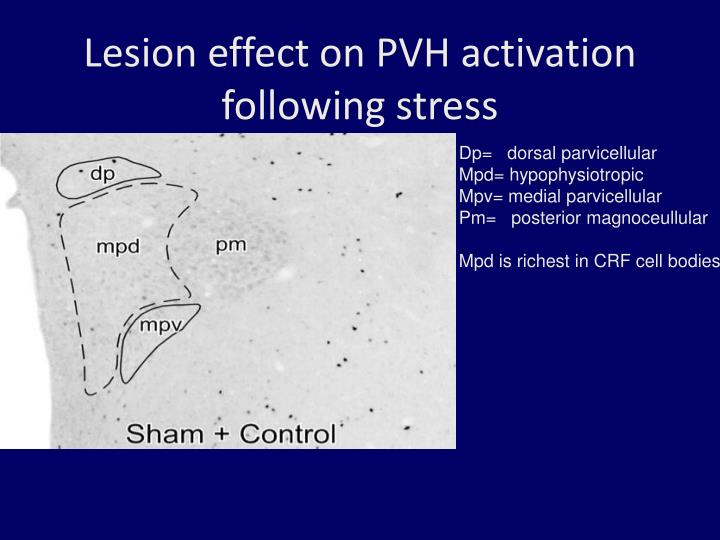 Lesion effect on PVH activation following stress