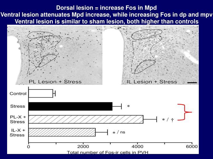 Dorsal lesion = increase Fos in Mpd