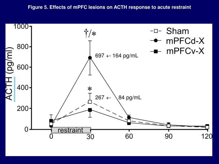 Figure 5. Effects of mPFC lesions on ACTH response to acute restraint