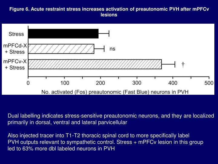 Figure 6. Acute restraint stress increases activation of preautonomic PVH after mPFCv lesions