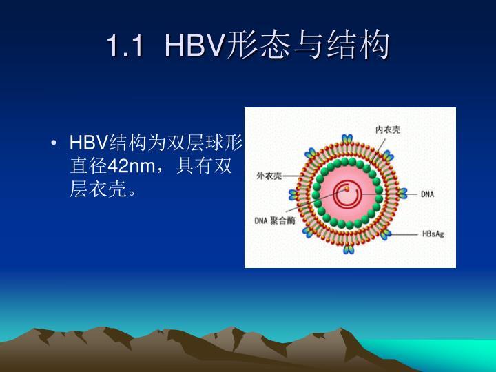 1.1  HBV