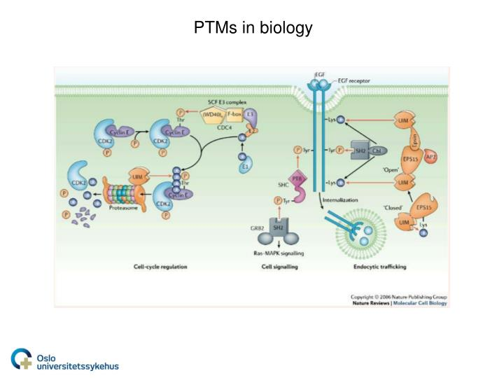 PTMs in biology