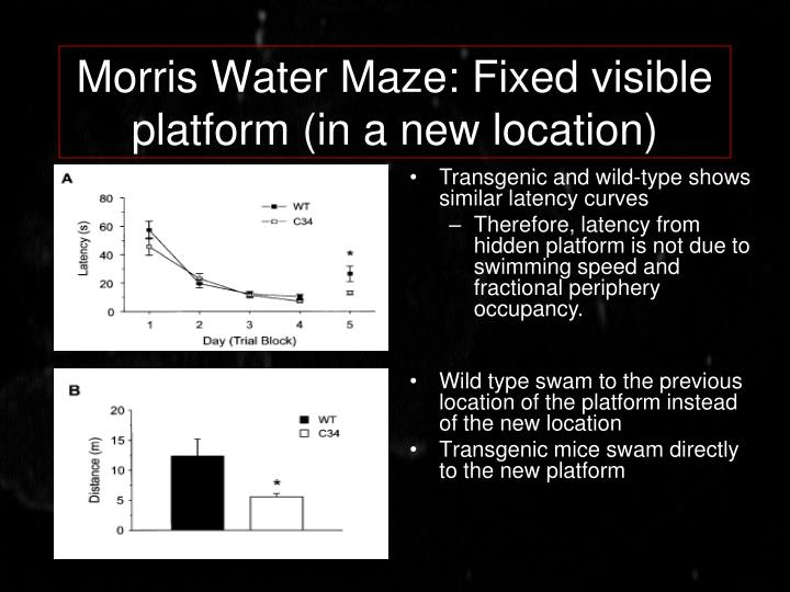 Morris Water Maze: Fixed visible platform (in a new location)
