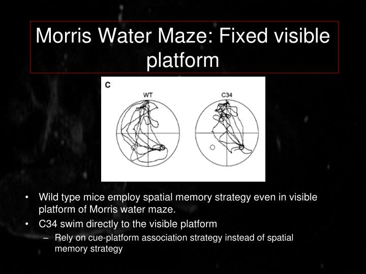 Morris Water Maze: Fixed visible platform