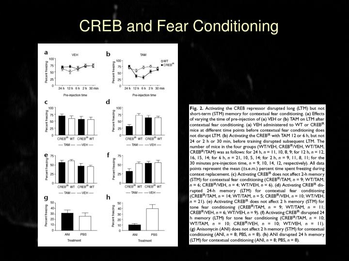 CREB and Fear Conditioning