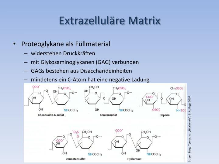 Extrazelluläre Matrix