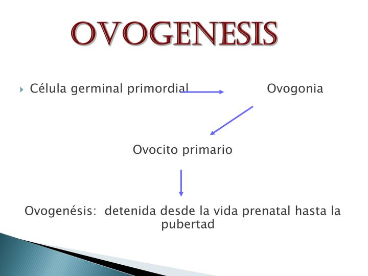 Ovogenesis