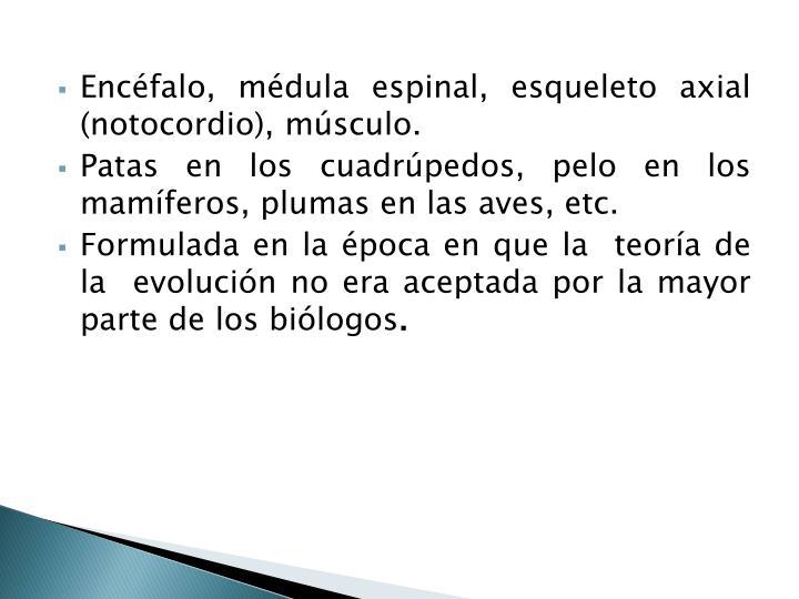 Encéfalo, médula espinal, esqueleto axial (notocordio), músculo.