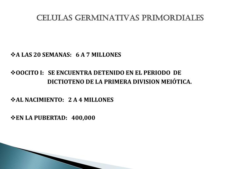 CELULAS GERMINATIVAS PRIMORDIALES