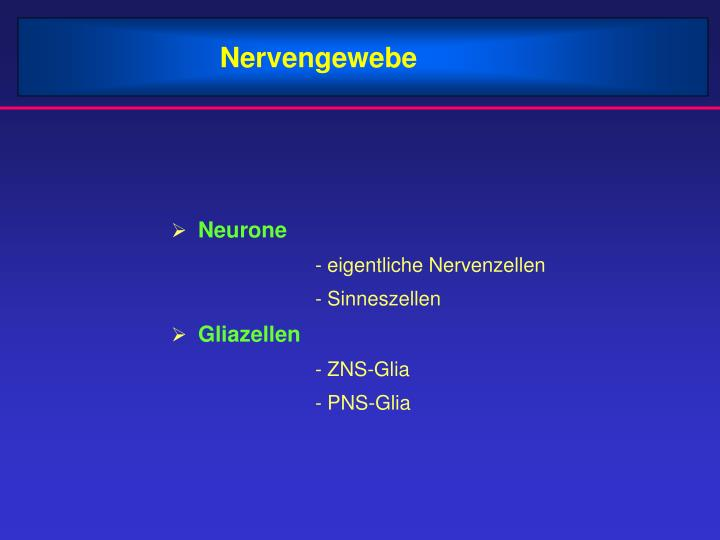 PPT - Nervengewebe PowerPoint Presentation - ID:3427519