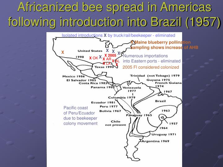 Africanized bee spread in americas following introduction into brazil 1957