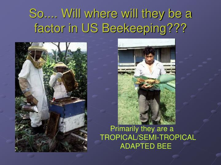 So.... Will where will they be a factor in US Beekeeping???