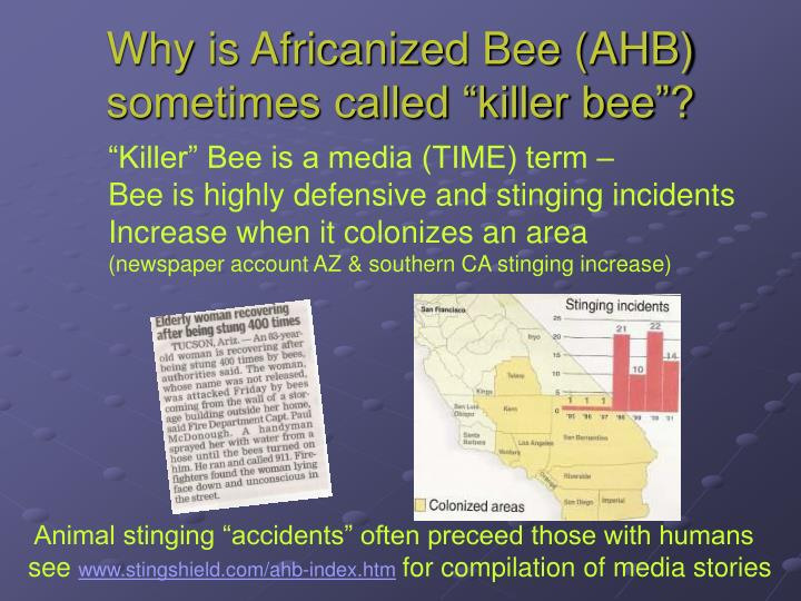 "Why is Africanized Bee (AHB) sometimes called ""killer bee""?"