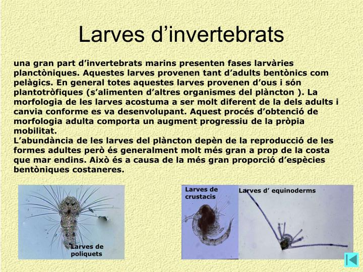 Larves d'invertebrats