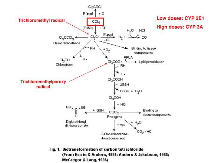 Low doses: CYP 2E1