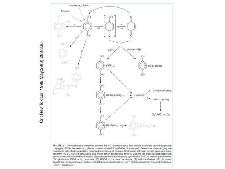 Crit Rev Toxicol. 1999 May;29(3):283-330