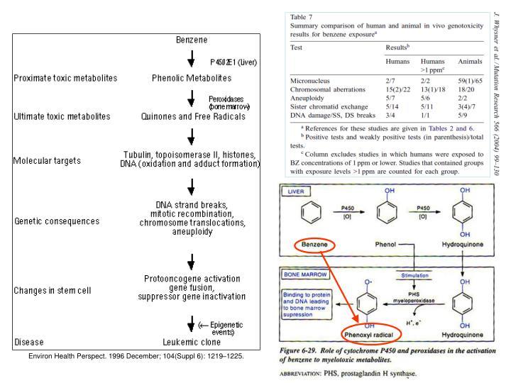 Environ Health Perspect. 1996 December; 104(Suppl 6): 1219–1225.