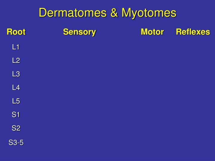 Dermatomes & Myotomes