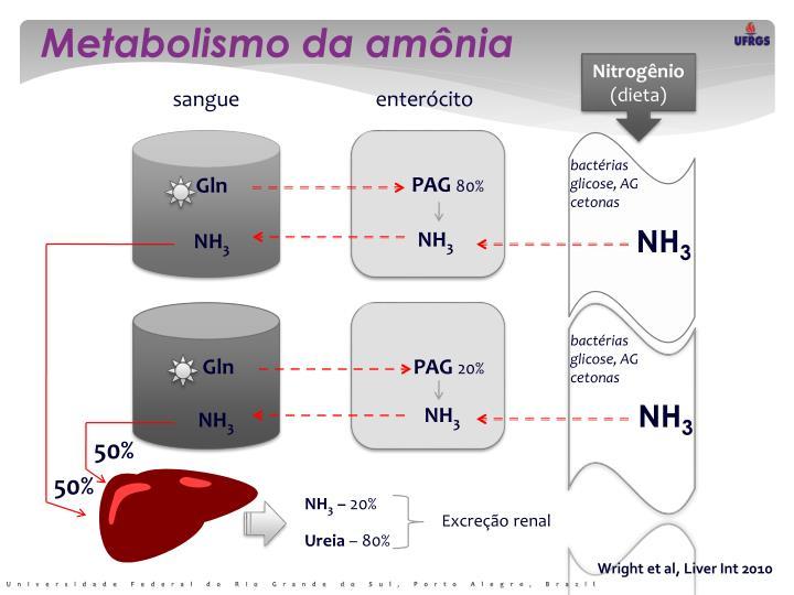 Metabolismo da amônia