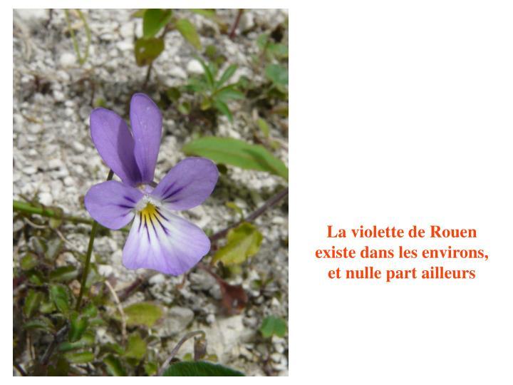 La violette de Rouen