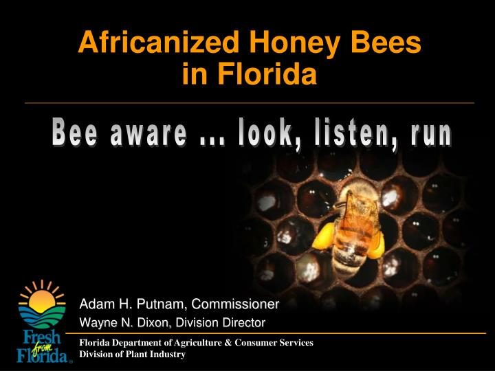 Africanized honey bees in florida
