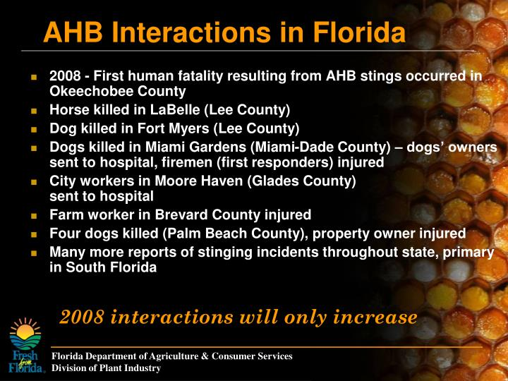 2008 - First human fatality resulting from AHB stings occurred in Okeechobee County