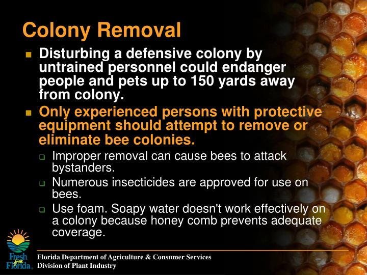 Colony Removal