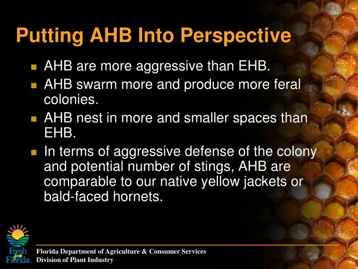 Putting AHB Into Perspective