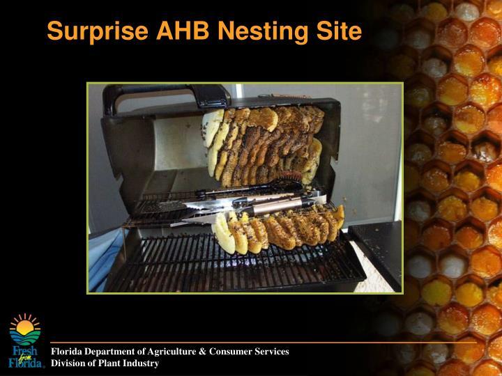 Surprise AHB Nesting Site