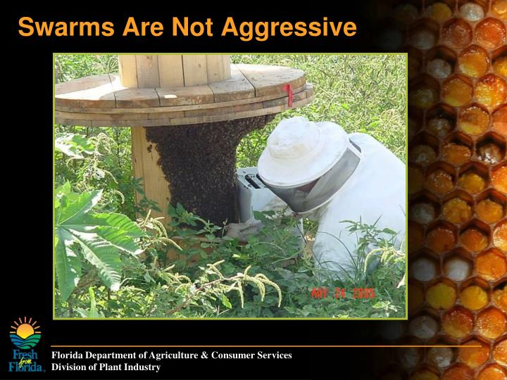 Swarms Are Not Aggressive