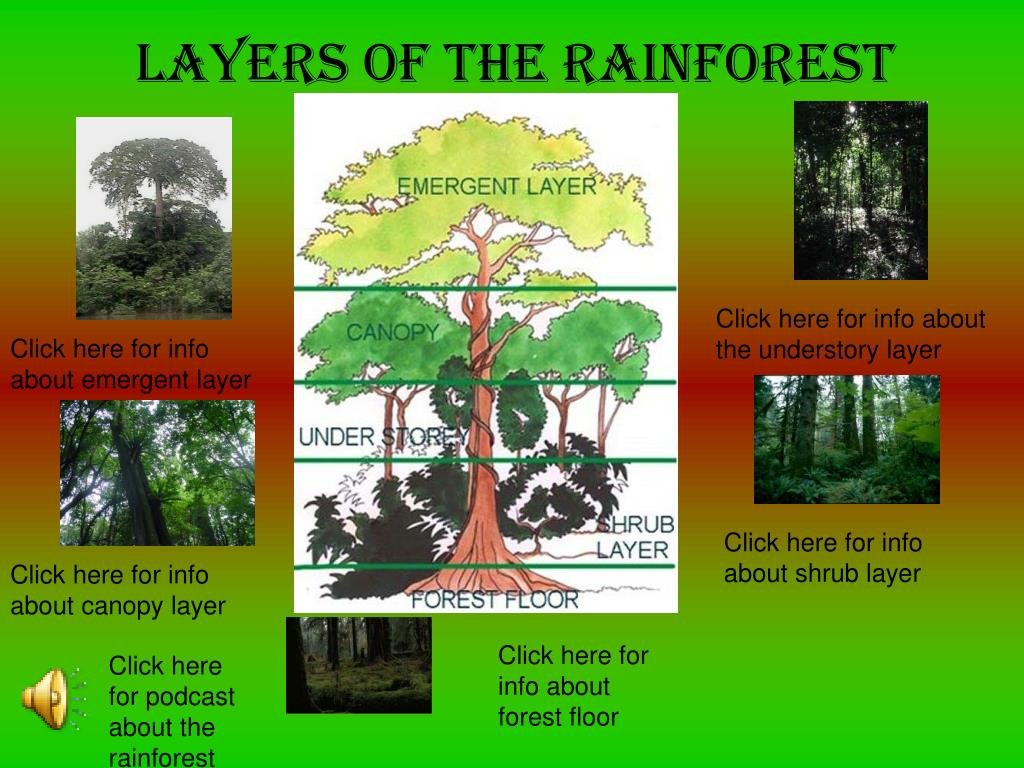 ppt layers of the rainforest powerpoint presentation id 3432253