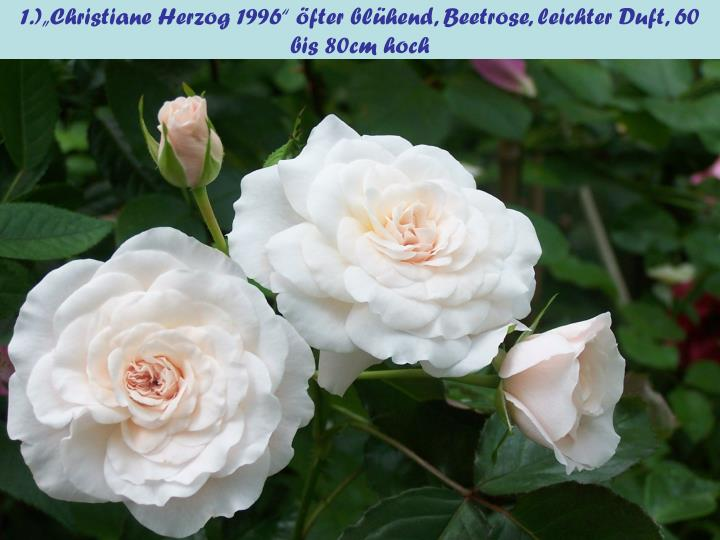 """1.)""""Christiane Herzog 1996"""" öfter blühend, Beetrose, leichter Duft, 60 bis 80cm hoch"""