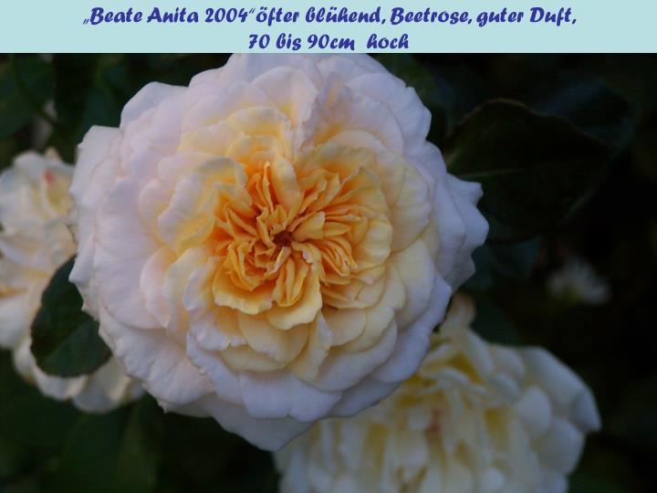 """""""Beate Anita 2004""""öfter blühend, Beetrose, guter Duft,"""