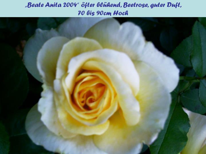 """""""Beate Anita 2004"""" öfter blühend, Beetrose, guter Duft,"""