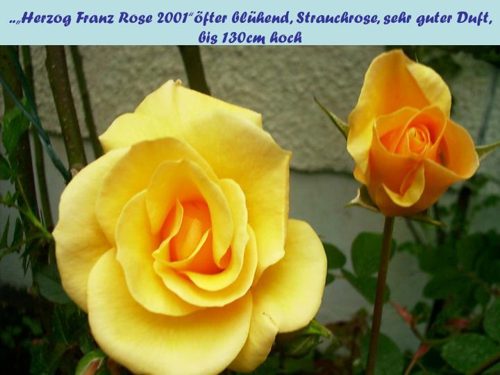 """..""""Herzog Franz Rose 2001""""öfter blühend, Strauchrose, sehr guter Duft, bis 130cm hoch"""