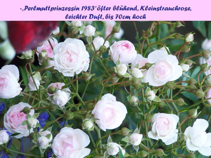 """-""""Perlmuttprinzessin 1983""""öfter blühend, Kleinstrauchrose,"""