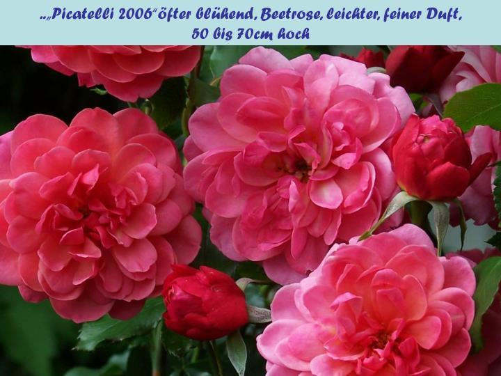 "..""Picatelli 2006""öfter blühend, Beetrose, leichter, feiner Duft,"