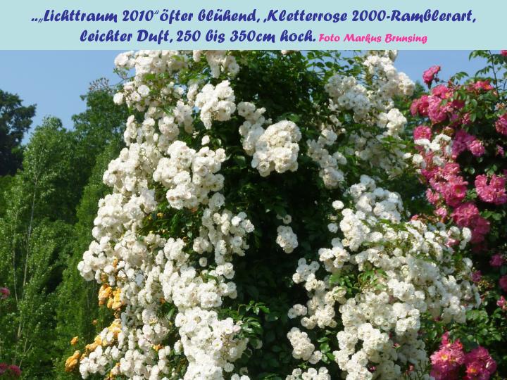 """..""""Lichttraum 2010""""öfter blühend, ,Kletterrose 2000-Ramblerart,"""