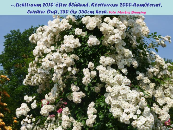 """--""""Lichttraum 2010""""öfter blühend, Kletterrose 2000-Ramblerart,"""