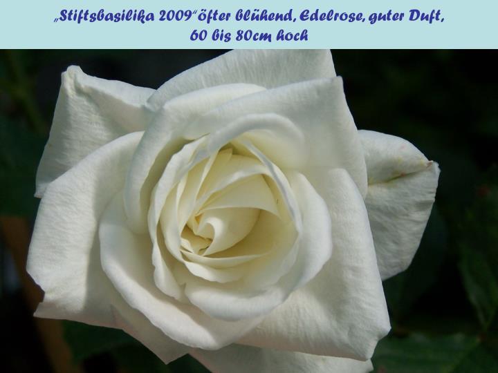 """Stiftsbasilika 2009""öfter blühend, Edelrose, guter Duft,"
